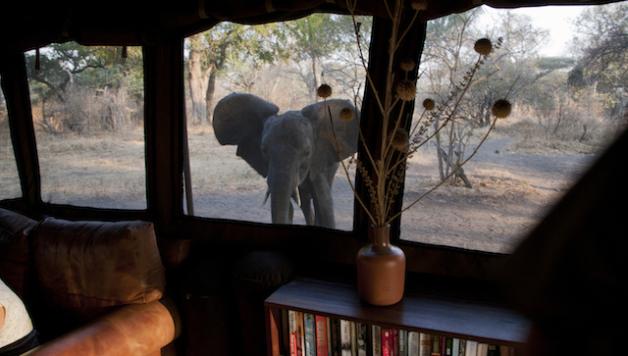 Katavi Safari - CREDIT Nomad Tanzania